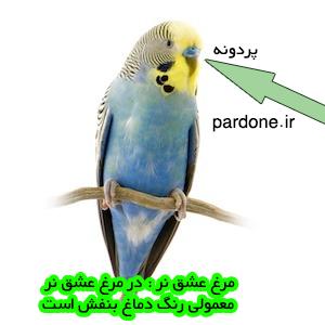 nar-pardone-ir---2
