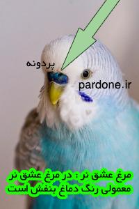 nar-pardone-ir---3