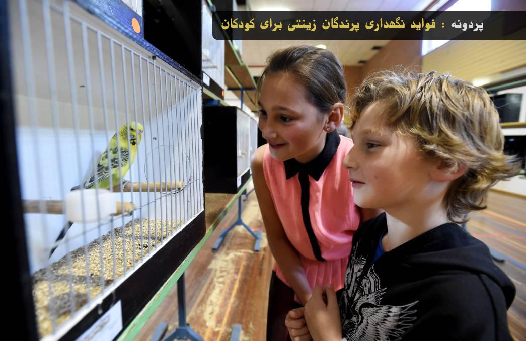 فواید نگهداری پرندگان زینتی مخصوصا مرغ عشق از دیدگاه محققان