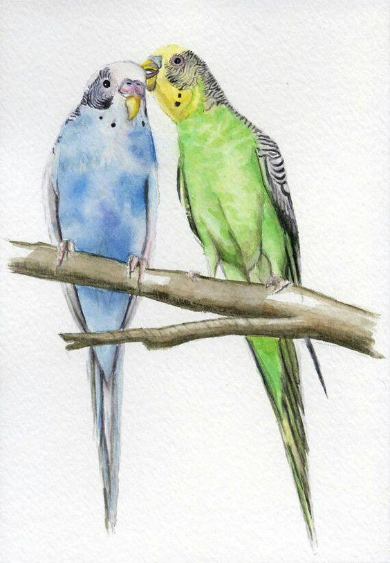دانلود صدای جفت گیری و آواز مرغ عشق با کیفیت بالا