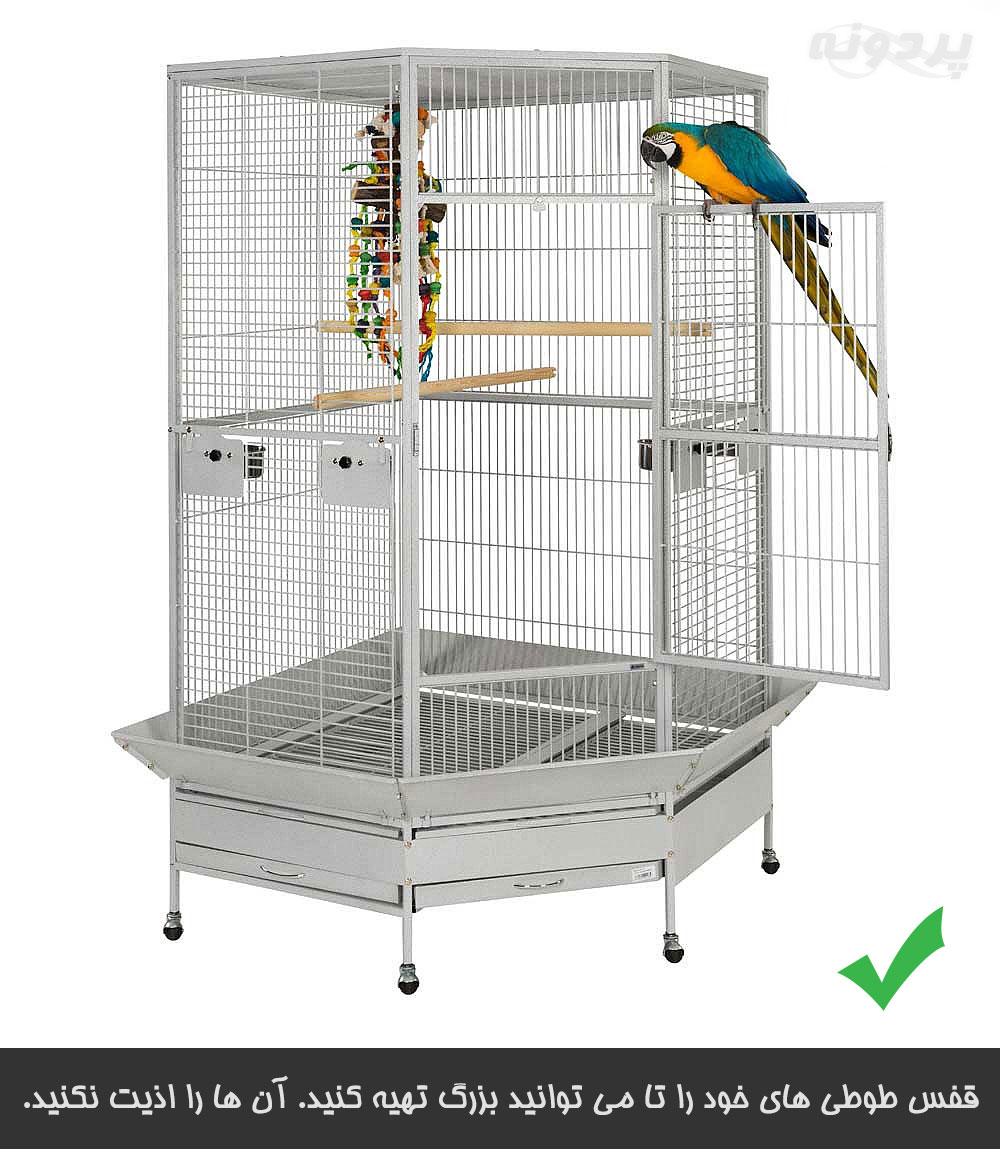 قفس مناسب برای طوطی و بررسی مشکلات نگهداری طوطی سانان در قفس کوچک