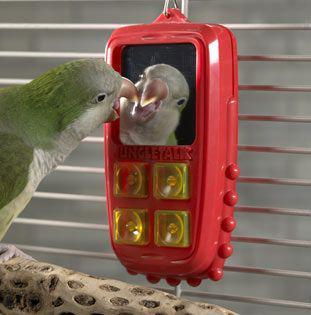 روش استفاده از ضبط صوت برای سخنگو کردن طوطی