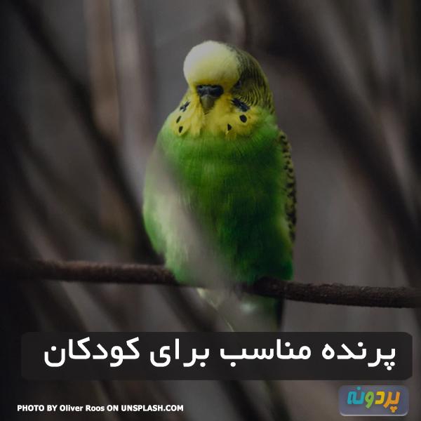 پرنده مناسب برای کودکان