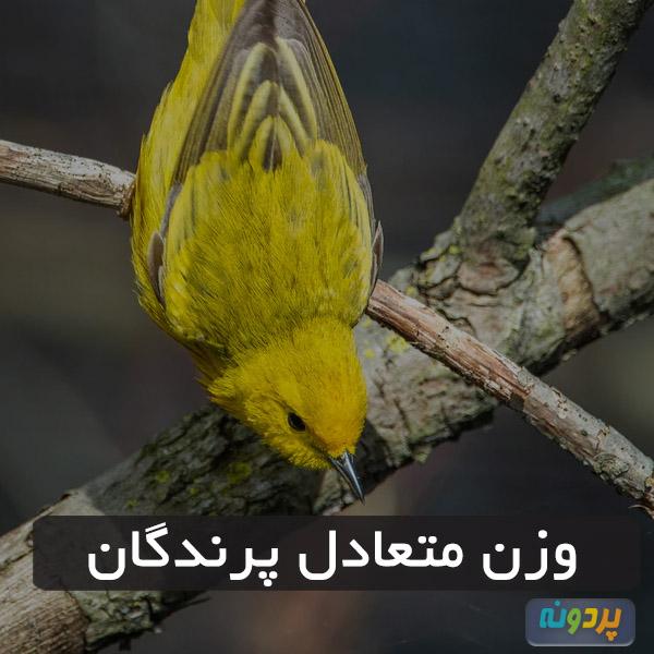 وزن متعادل پرندگان